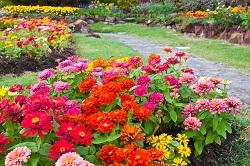 w3 garden flowers acton